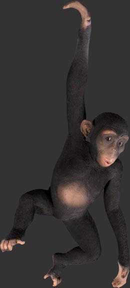 Hanging Monkey 3 ft. / Fiberglass