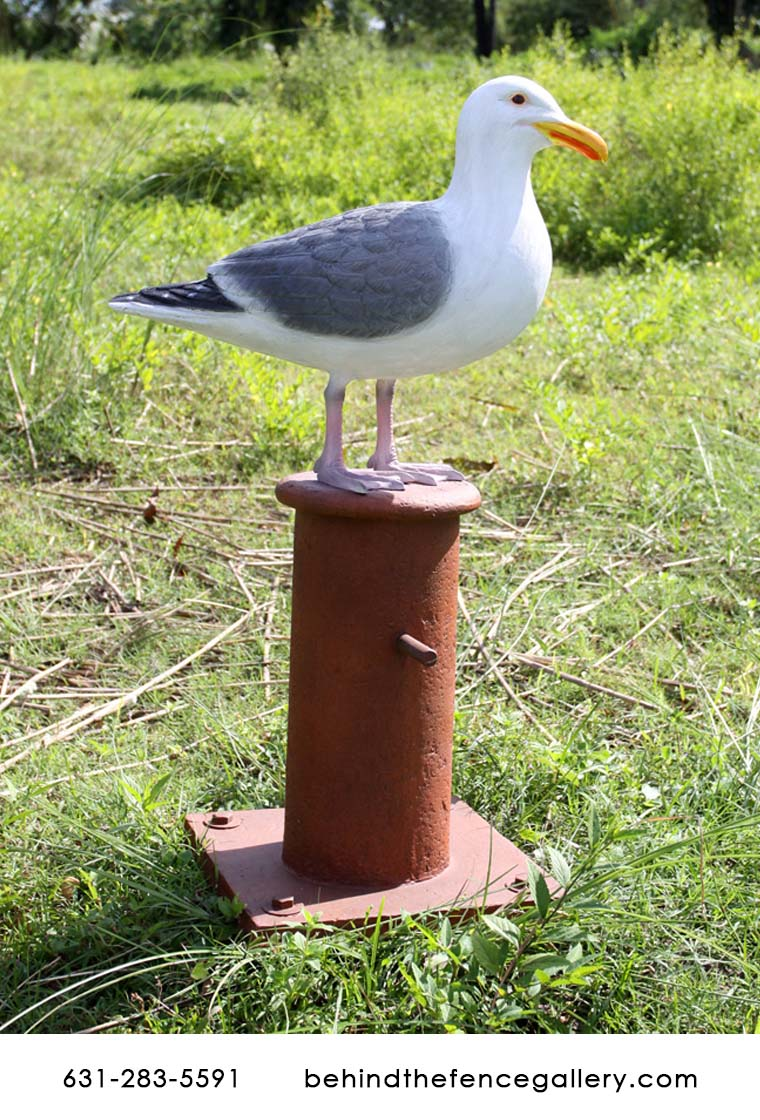 Seagull on Mooring Board
