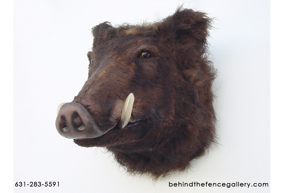 Wild Boar Head Wall Mount