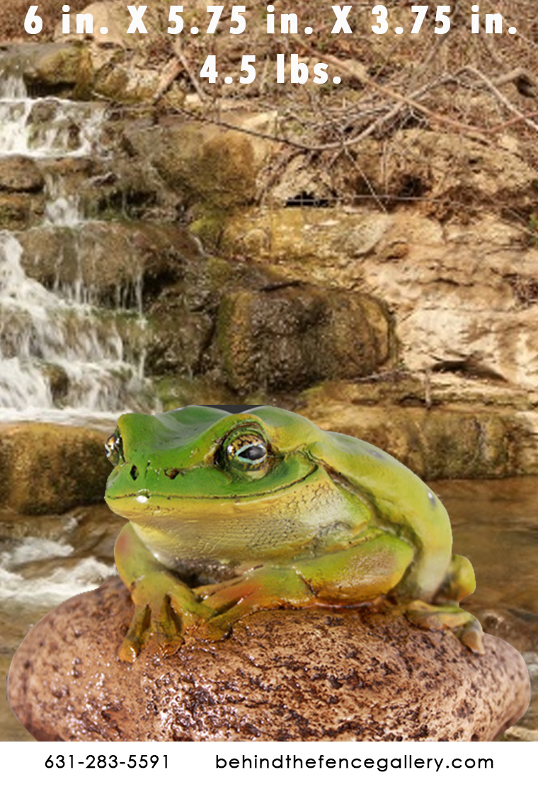 Green Frog on Rock
