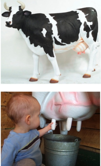 The Milking Dairy Cow (with or without Horns)