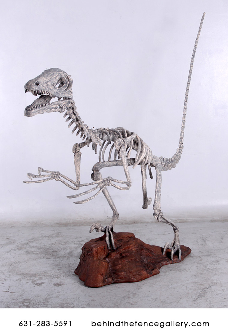 Deinonychus Skeleton Statue